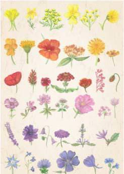 Postkarte Blumen Sommerregenbogen