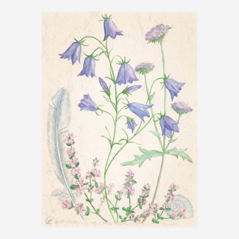 "Postkarte ""Glockenblume"" von Anna Lübsee"