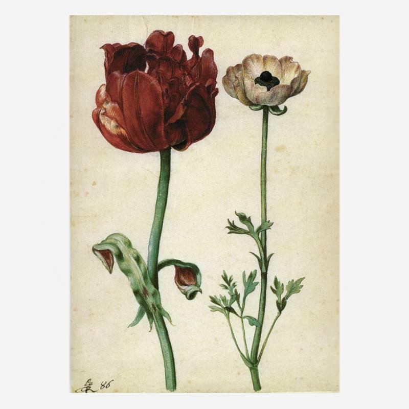 Tulpe und Gartenranunkel (G. Flegel)