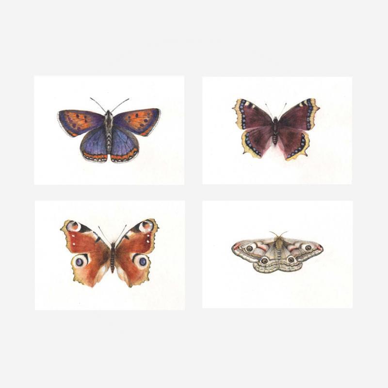 Schmetterlinge Set (4 Postkarten A6)