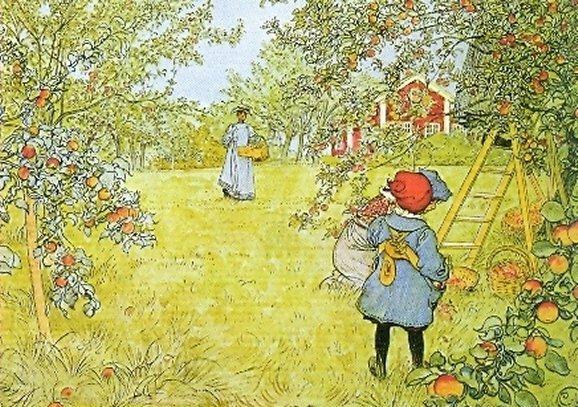 Postkarte Apfelernte (Larsson)