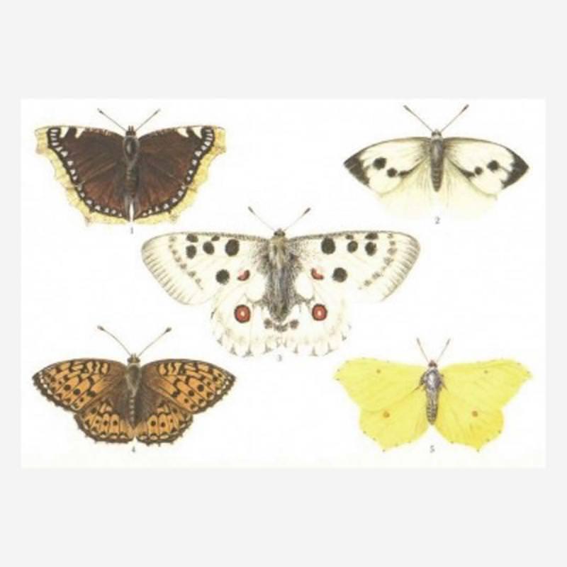 Postkarte Schmetterlinge