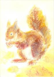 Postkarte Meine Tiere Eichhörnchen