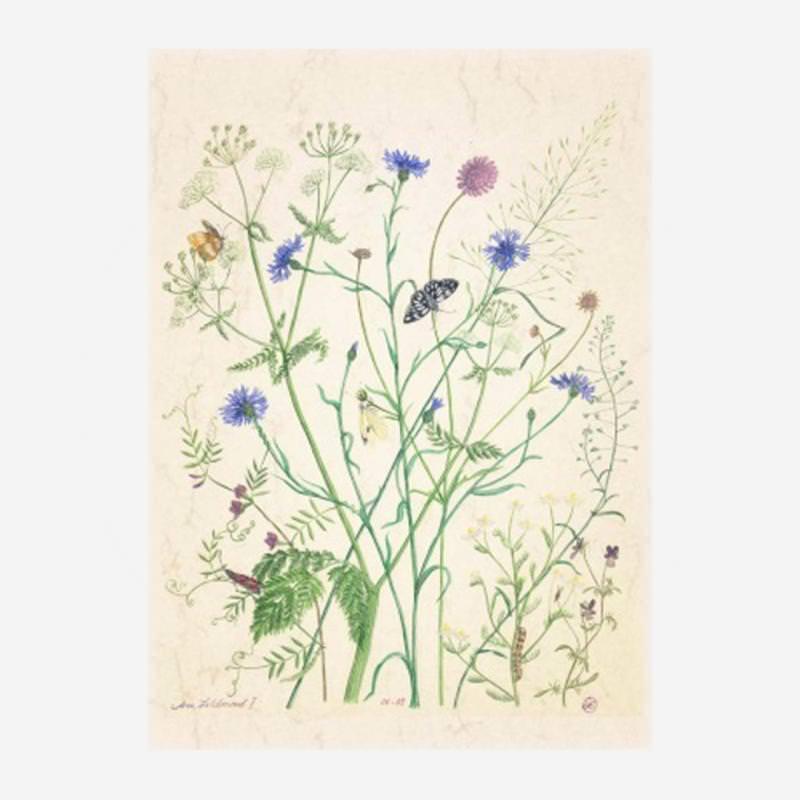 "Postkarte ""Am Feldrand"" von Anna Lübsee"