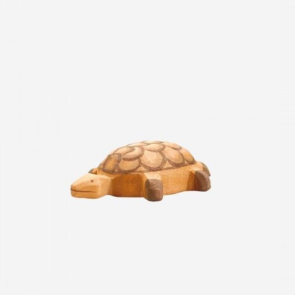 Schildkröte klein