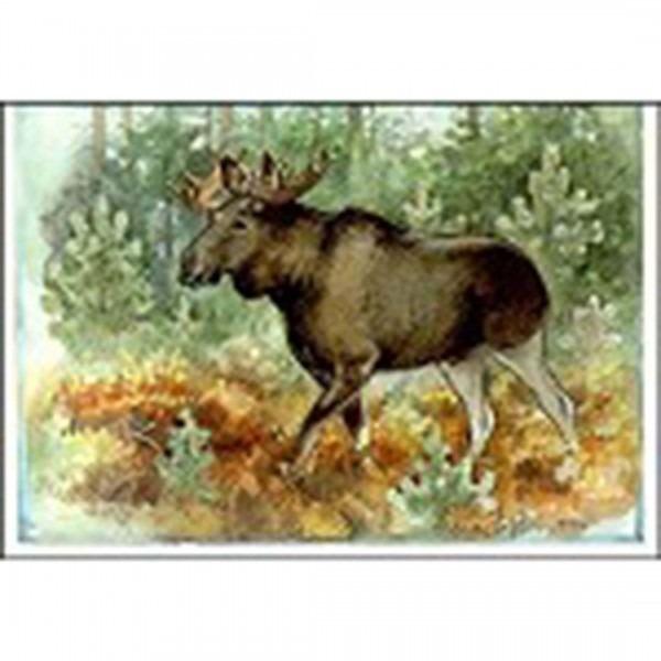 Postkarte Elch