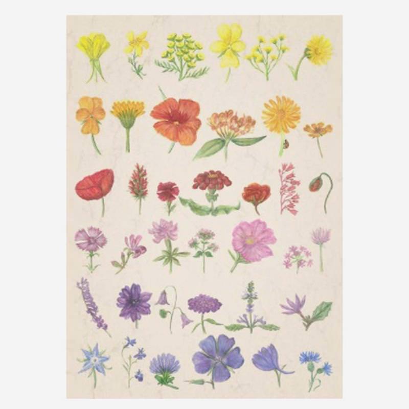 Postkarte Blumen Sommerregenbogen von Anna Lübsee