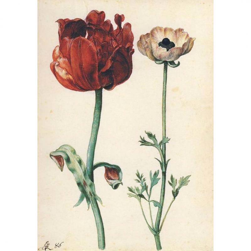 Postkarte Tulpe und Gartenranunkel